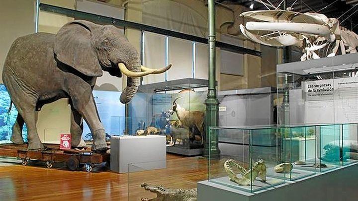 Los tesoros del Museo de Historia Natural, una alternativa para toda la familia