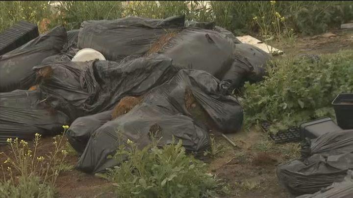 Vertedero de restos de plantaciones de marihuana en la Cañada Real