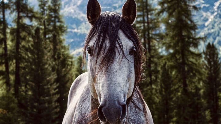 Plan a caballo con niños en Madrid, ¿te atreves?