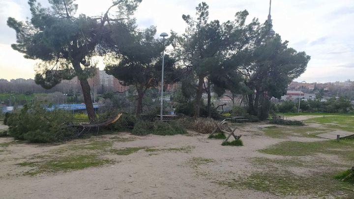 El Pinar de La Elipa aún no ha sido limpiado tras la borrasca Filomena