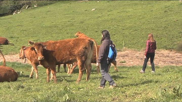 Cantabria abre la primera escuela de pastoras