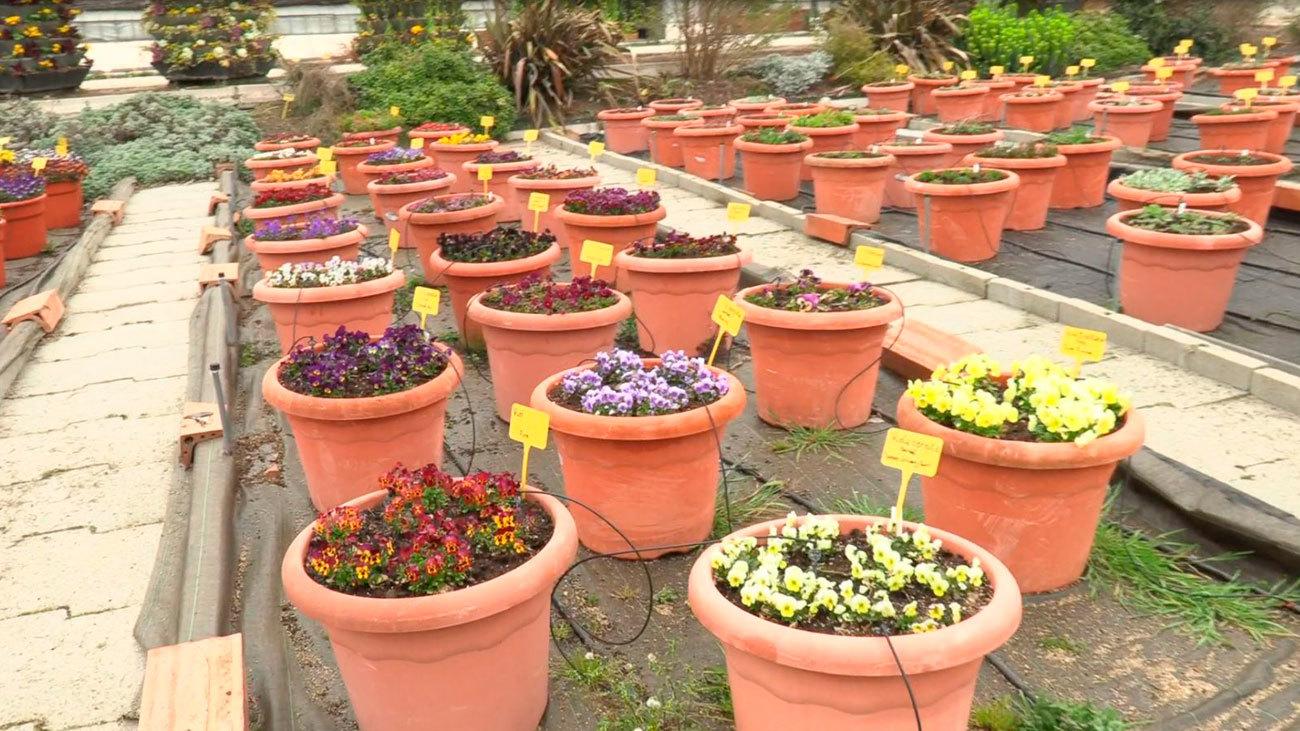 El vivero de las Estufas del Retiro, un pequeño oasis para las plantas