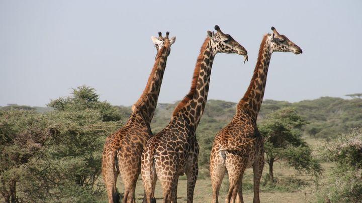 Tanzania, hogar de numerosos animales salvajes, próximo destino de Madrileños por el mundo