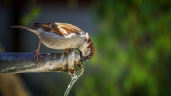 ¿Por qué el agua de Madrid es tan buena?