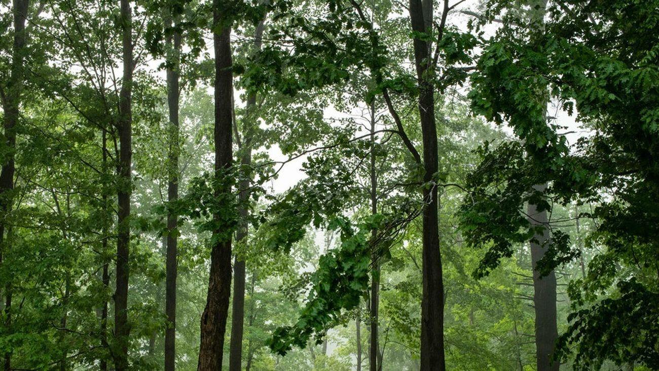 El 'Bosque de los Abrazos Perdidos' homenajeará a las víctimas de Covid en Madrid