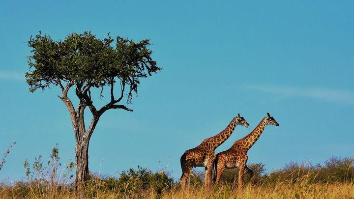 Ngorongoro, volcanes, sabana, animales salvajes y vistas impresionantes en Tanzania