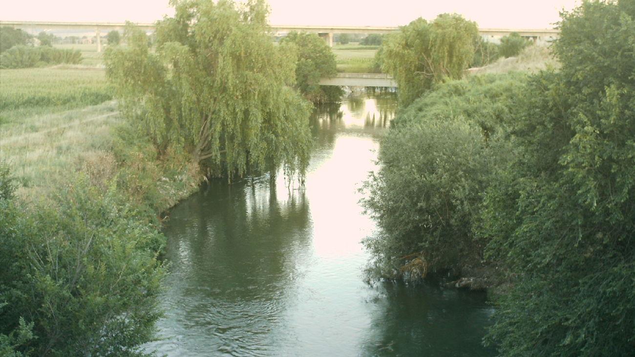 Getafe inicia una campaña de control de mosquitos y mosca negra en la ribera del Manzanares