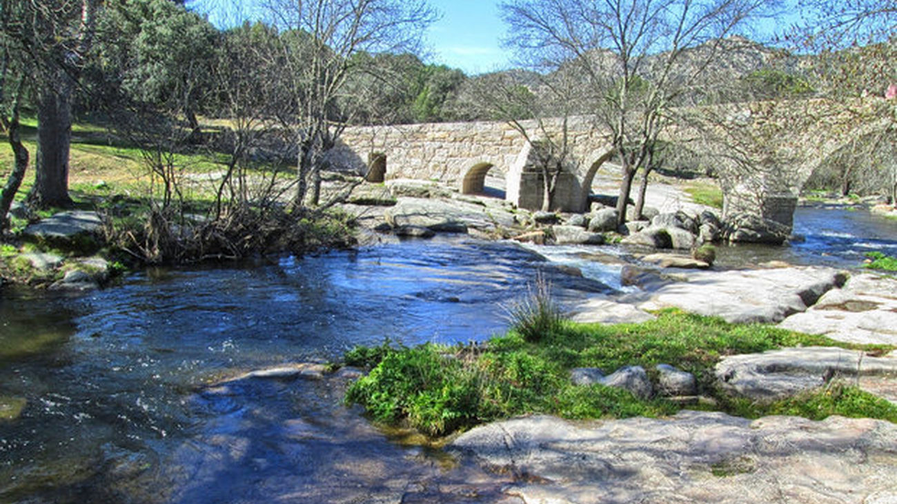 La trucha común autóctona ha desaparecido ya en la cuenca  del río Cofio, en Madrid