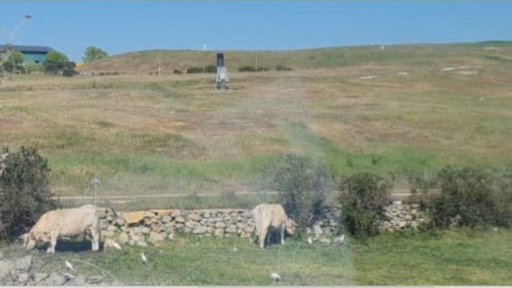Ecologistas denuncian que un grupo de vacaspasta junto al vertedero de Colmenar Viejo