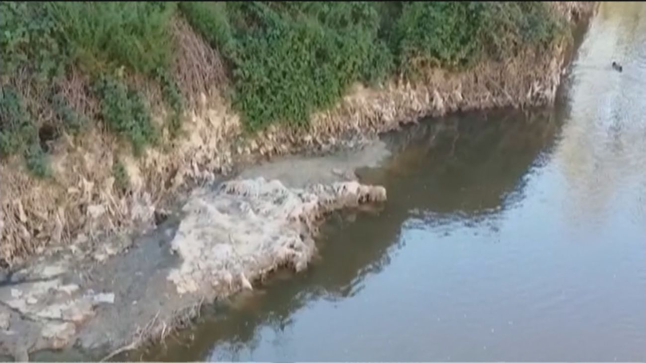 Los patos comen toallitas y basura en el río Jarama, donde se vierten aguas residuales sin depurar