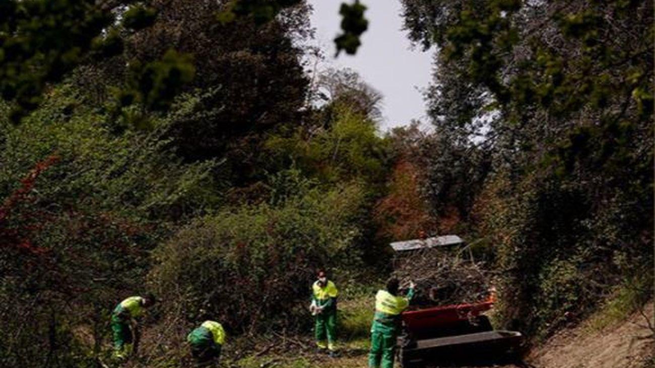 Las labores de mantenimiento y limpieza de  los barrancos naturales de Las Rozas se prolongará hasta finales de junio