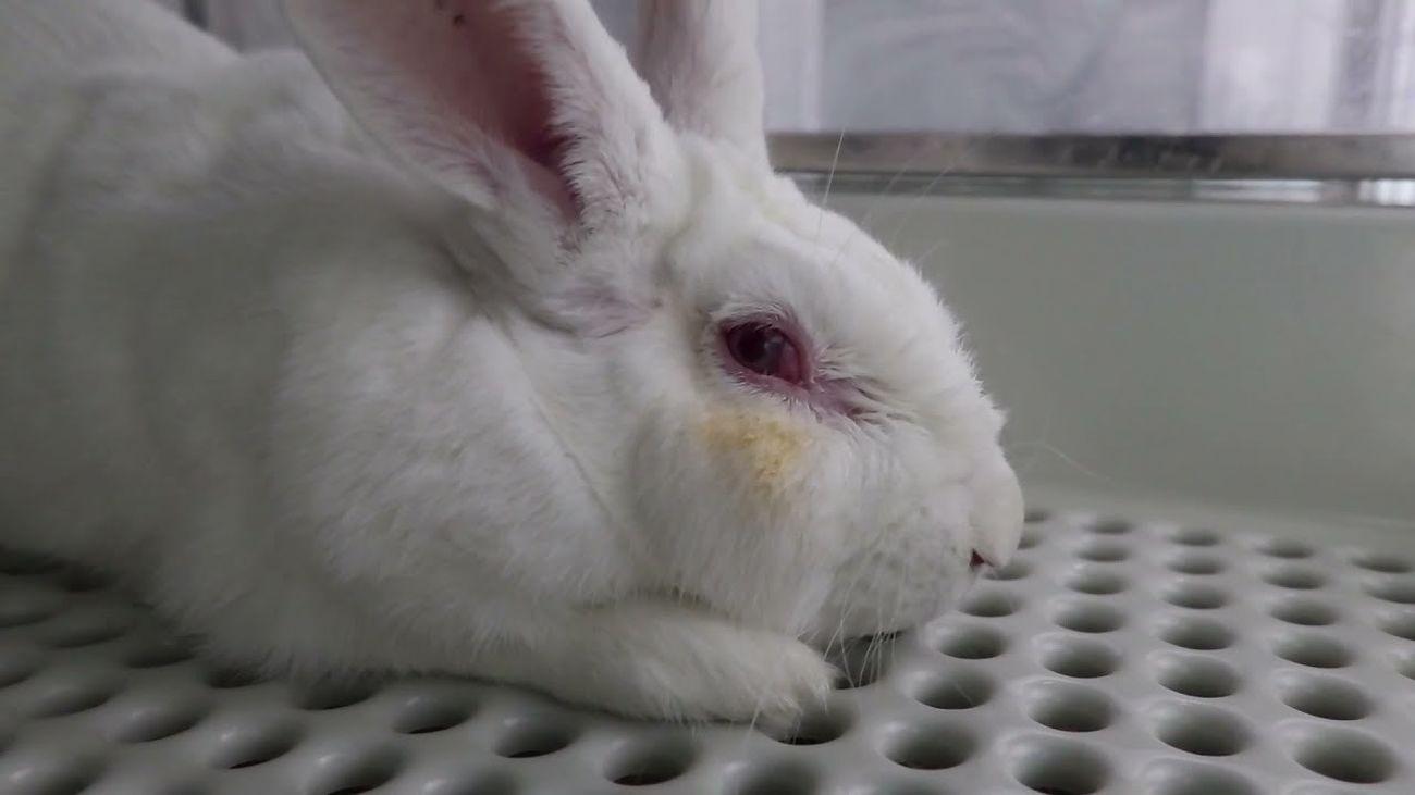 Un vídeo muestra maltrato animal en un laboratorio de investigación de Madrid
