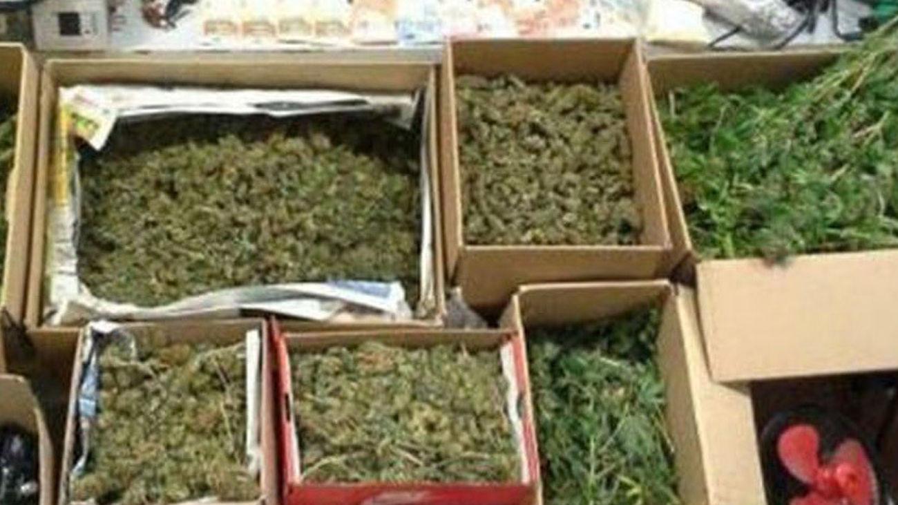 Cajas de marihuana