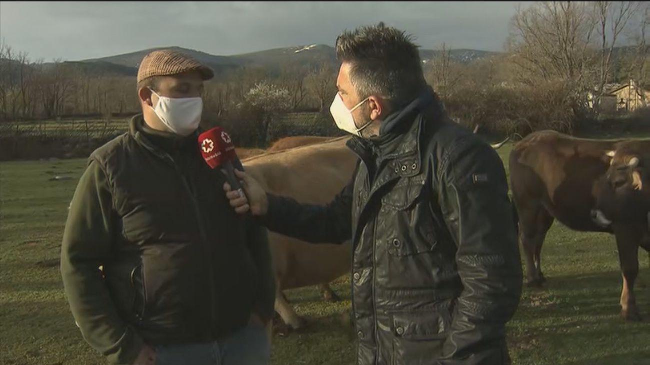 'Del ganadero a tu casa', ya es posible comprar la carne de la Sierra Norte de Madrid directamente  por internet