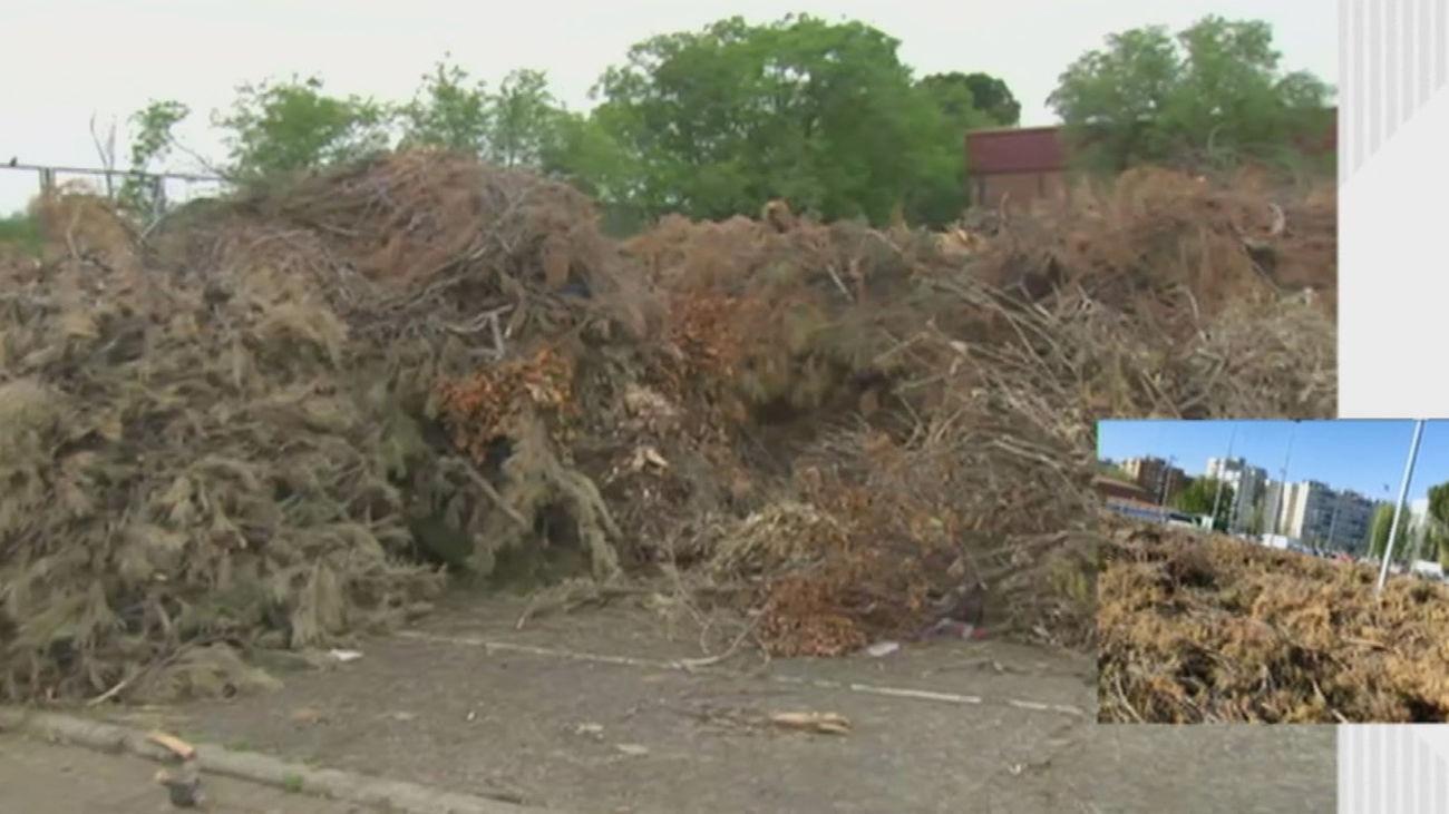 Montones de ramas cortadas se acumulan en Móstoles