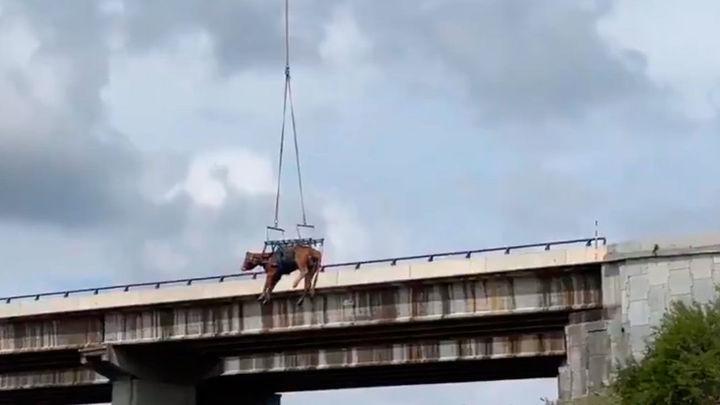 Un helicóptero del GERA rescata una vaca de un terraplén en El Molar