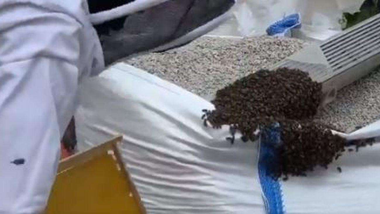 Los bomberos del Ayuntamiento retiran enjambres de abejas en el Retiro