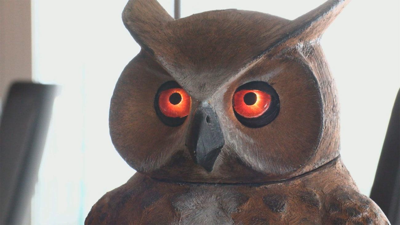 Arquímides, el búho 'espanta palomas' patentado por un madrileño