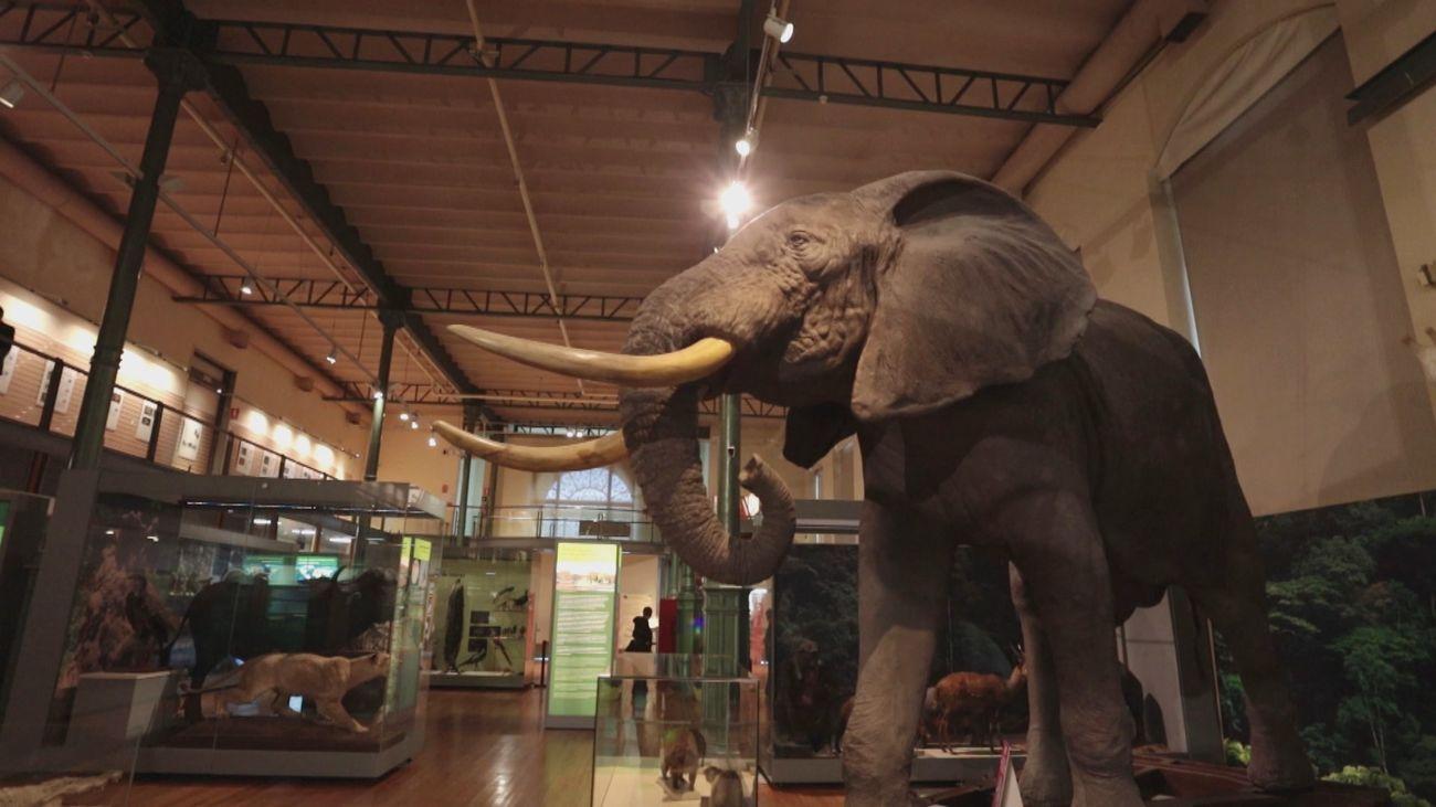Dinosaurios y ballenas gigantes en el Museo Nacional de Ciencias Naturales