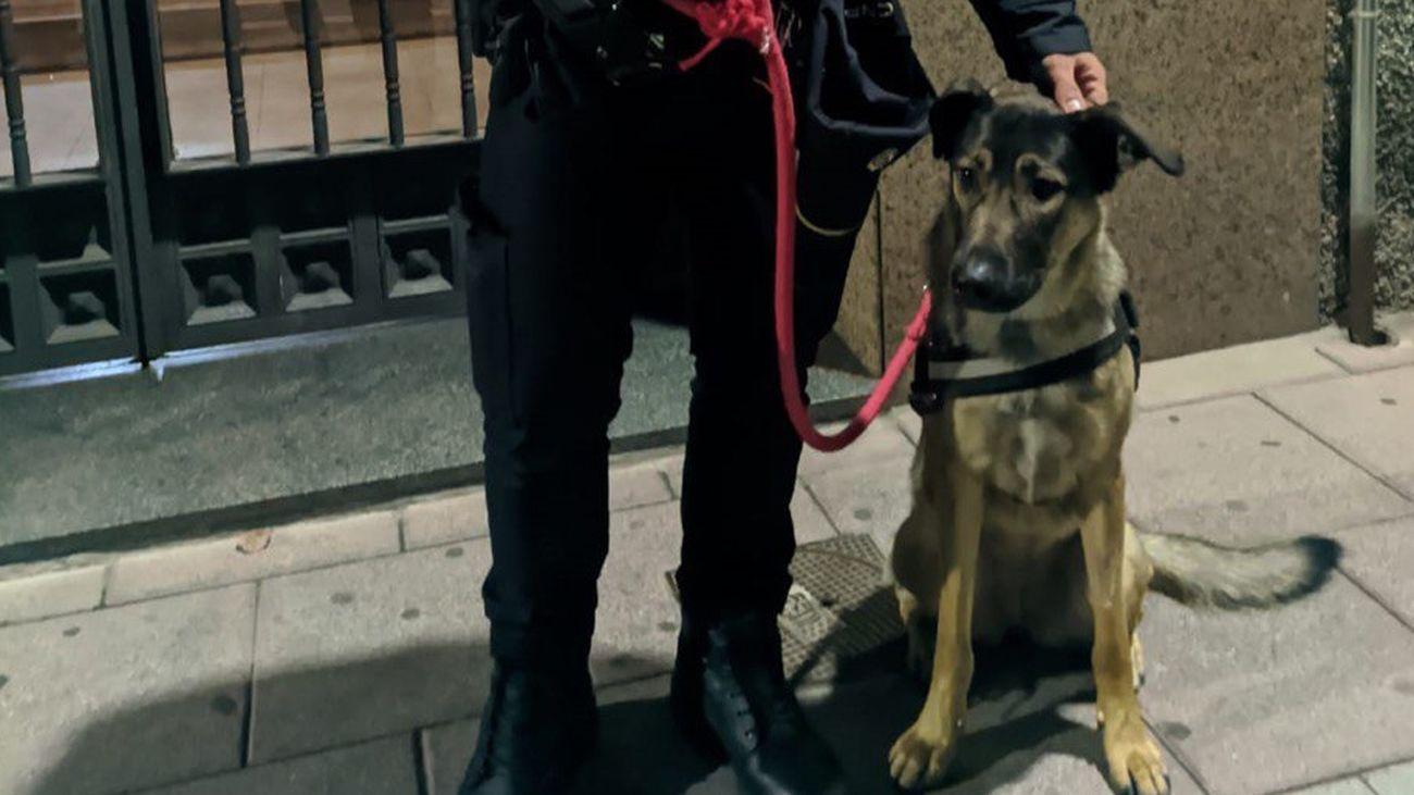 Freya, una perrita maltratada en Torrejón