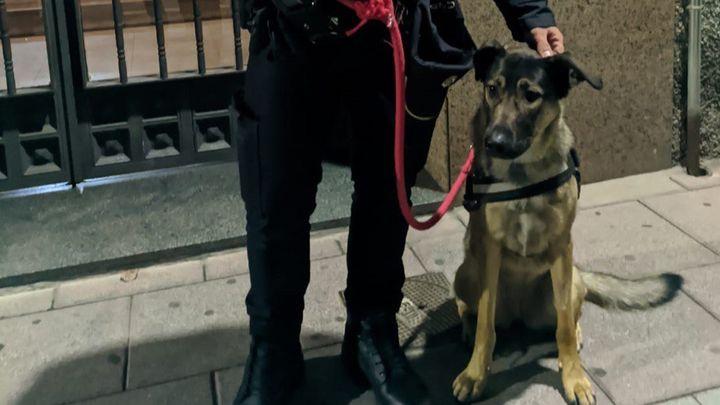 La historia de Freya, una perrita maltratada en Torrejón: su dueño ha sido detenido