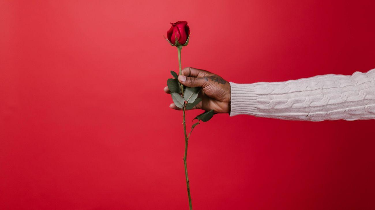 ¿Por qué se regalan rosas el Día del Libro?