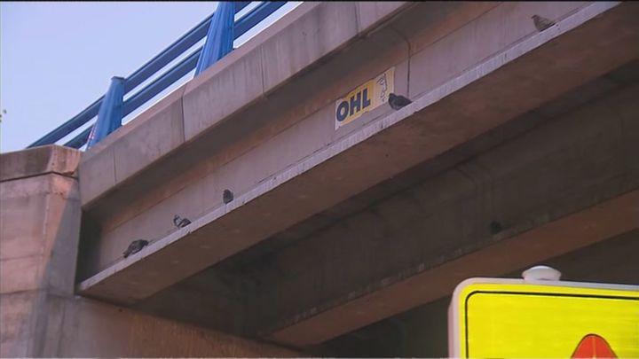 Denuncian que tienen que esquivar excrementos de palomas de camino al cole en un puente de la M-607 en Fuencarral