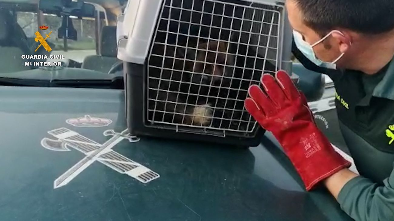 Imagen del zorro rescatado
