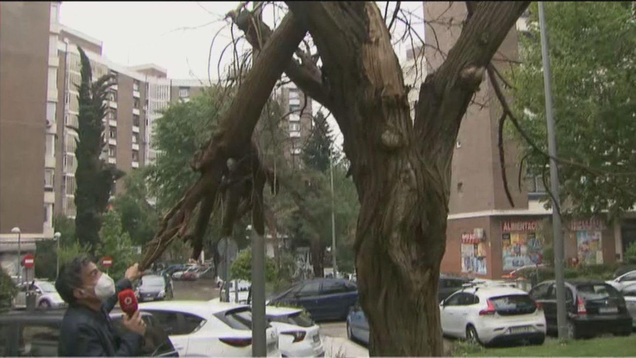 Los vecinos de Sanchinarro piden que se tale la rama de un árbol seco que está a punto de caer