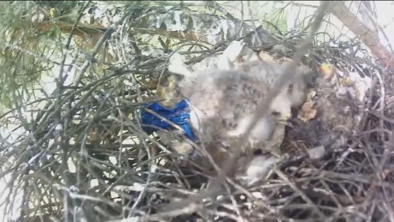 Los residuos de las mascarillas llegan hasta los nidos de las aves de Doñana