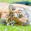 Planes para disfrutar de los animales en plena naturaleza sin salir de Madrid