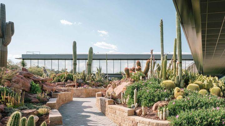 Desert City, una ciudad de cactus en Madrid