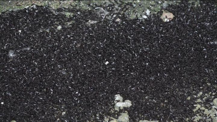 Una plaga de bichos se apodera de una zona de Fuenlabrada