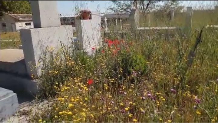 Una jungla de hierbajos cubre las deterioradas tumbas del cementerio de Villaverde Alto