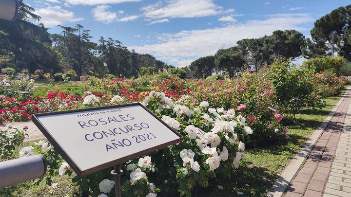 En busca de la rosa perfecta en La Rosaleda de Madrid