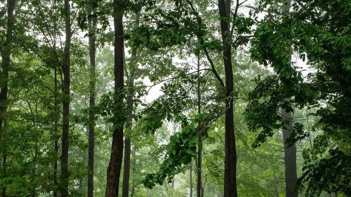 Alcalá creará un bosque urbano en el Parque Lineal Félix Rodríguez de la Fuente