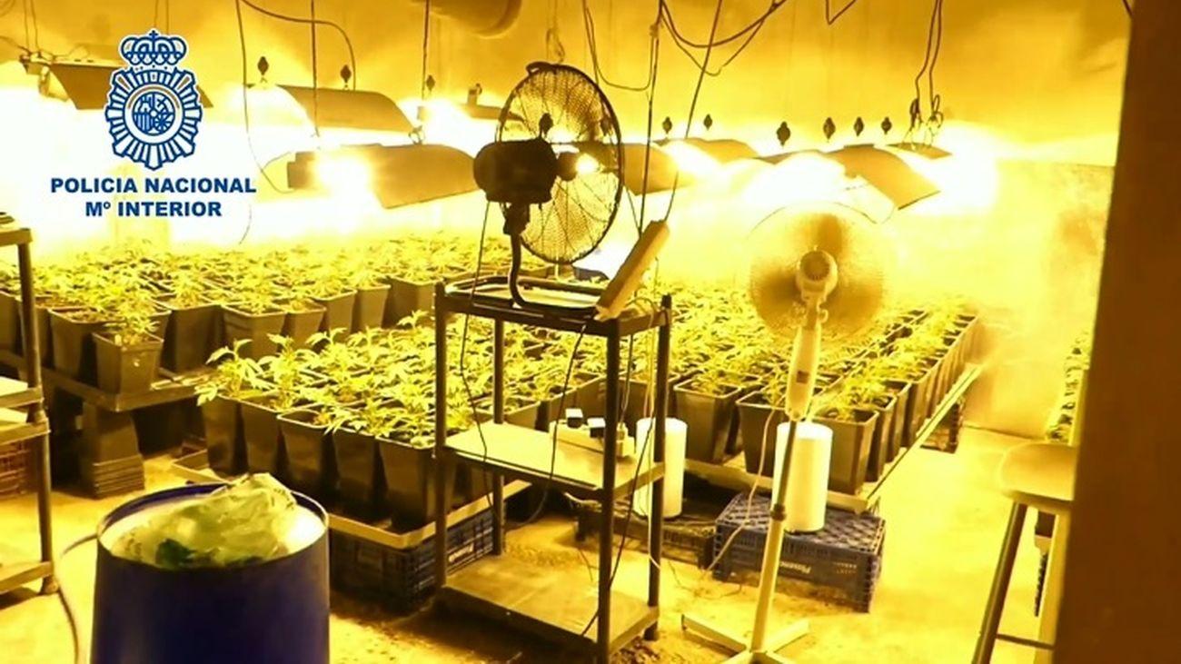 Tres detenidos al ser desmantelada una plantación de marihuana en Ontígola (Toledo)