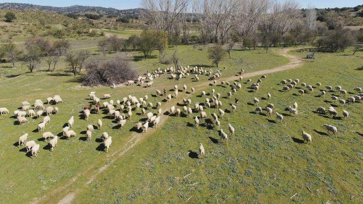 Madrid desde el aire: Cañadas y trashumancia