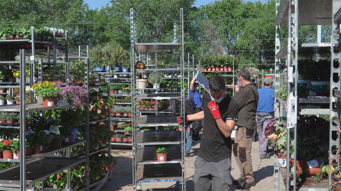 La primavera 'pos-Filomena' incrementa un 5% las ventas de plantas con flor