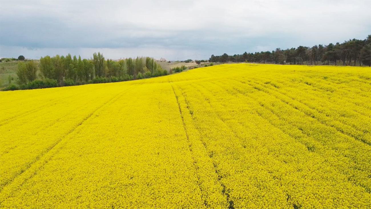 Mi cámara y yo: Paisajes de primavera
