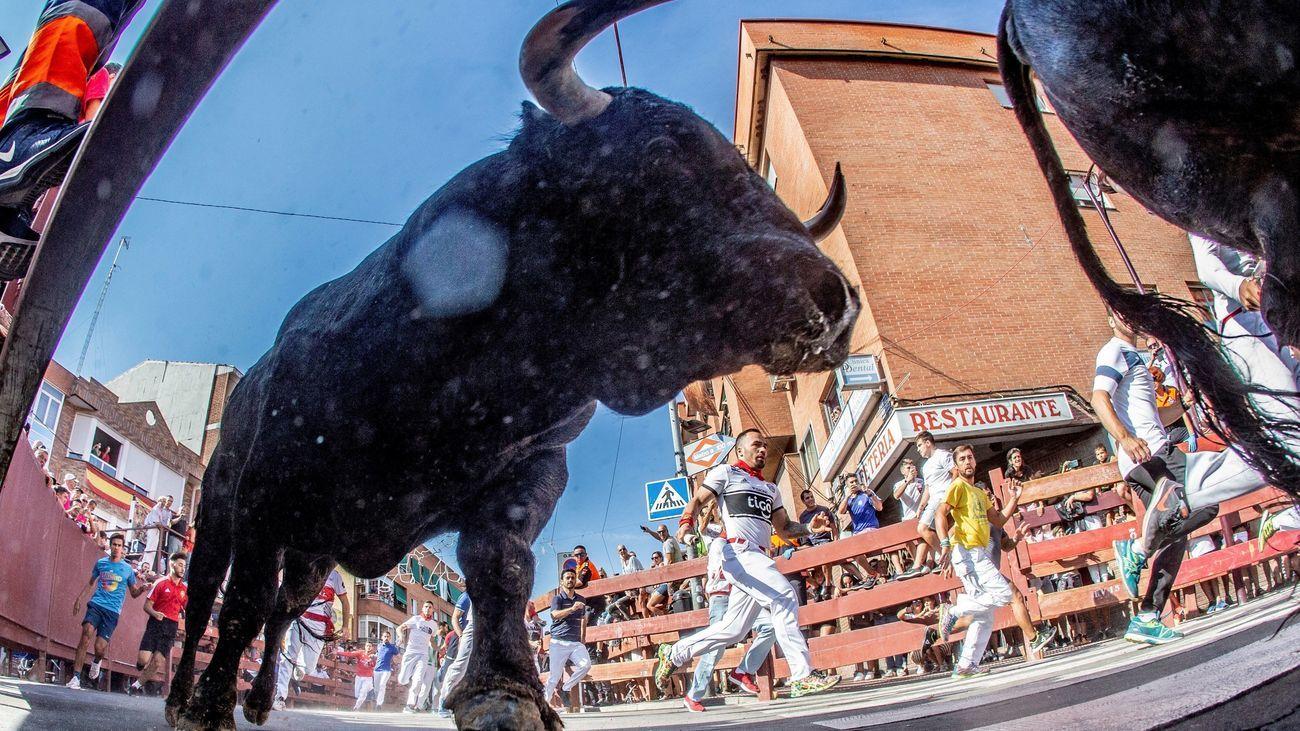 San Sebastián propone un protocolo especial para poder celebrar sus encierros taurinos
