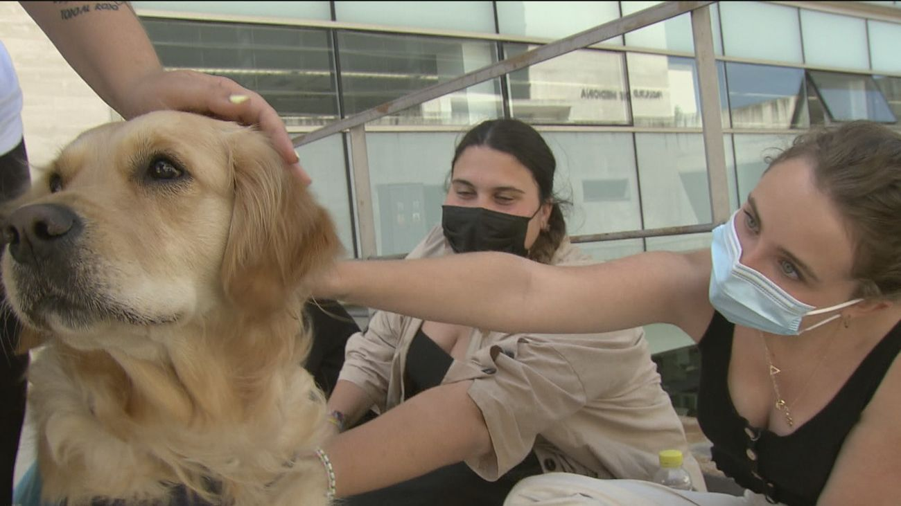 Terapia con perros 'antiestrés' para quitar la ansiedad a los estudiantes en los exámenes finales