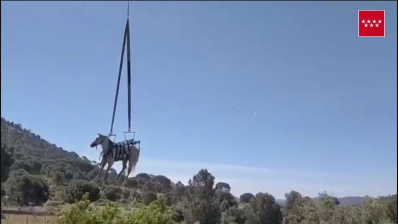Los bomberos rescatan un caballo que cayó a un foso lleno de agua en Valdemaqueda