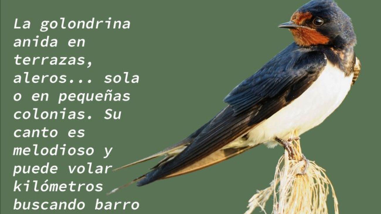Ecologistas en Acción sensibiliza sobre la importancia de las aves migratorias con la campaña 'Las tres mosquiteras'