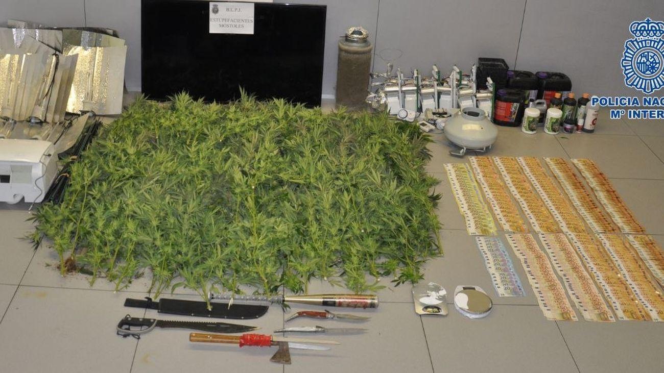 Nueve detenidos y desmanteladas dos plantaciones de marihuana en Móstoles