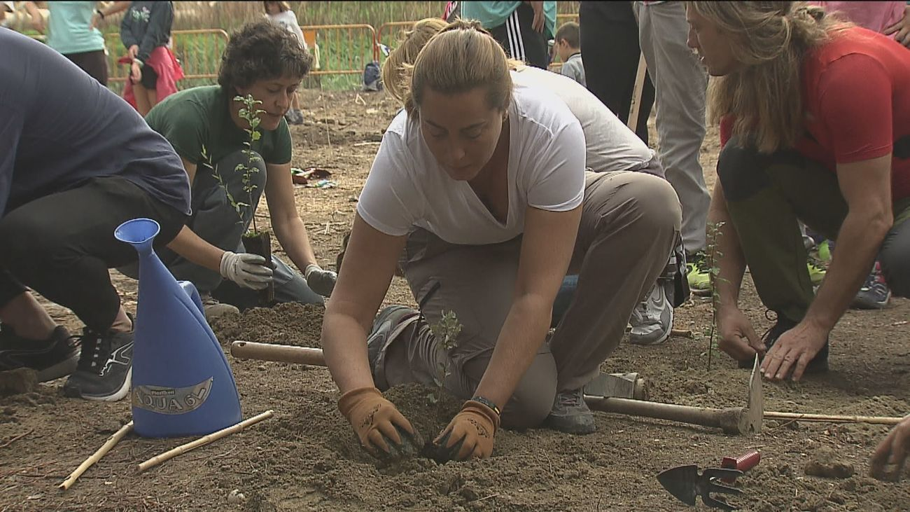 Replanta un árbol en Madrid en el Día Mundial de la  Biodiversidad