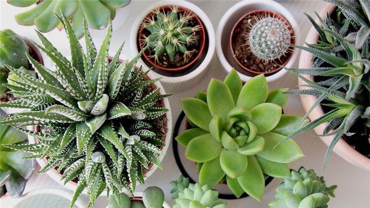 ¿Cómo cuido las plantas en verano?