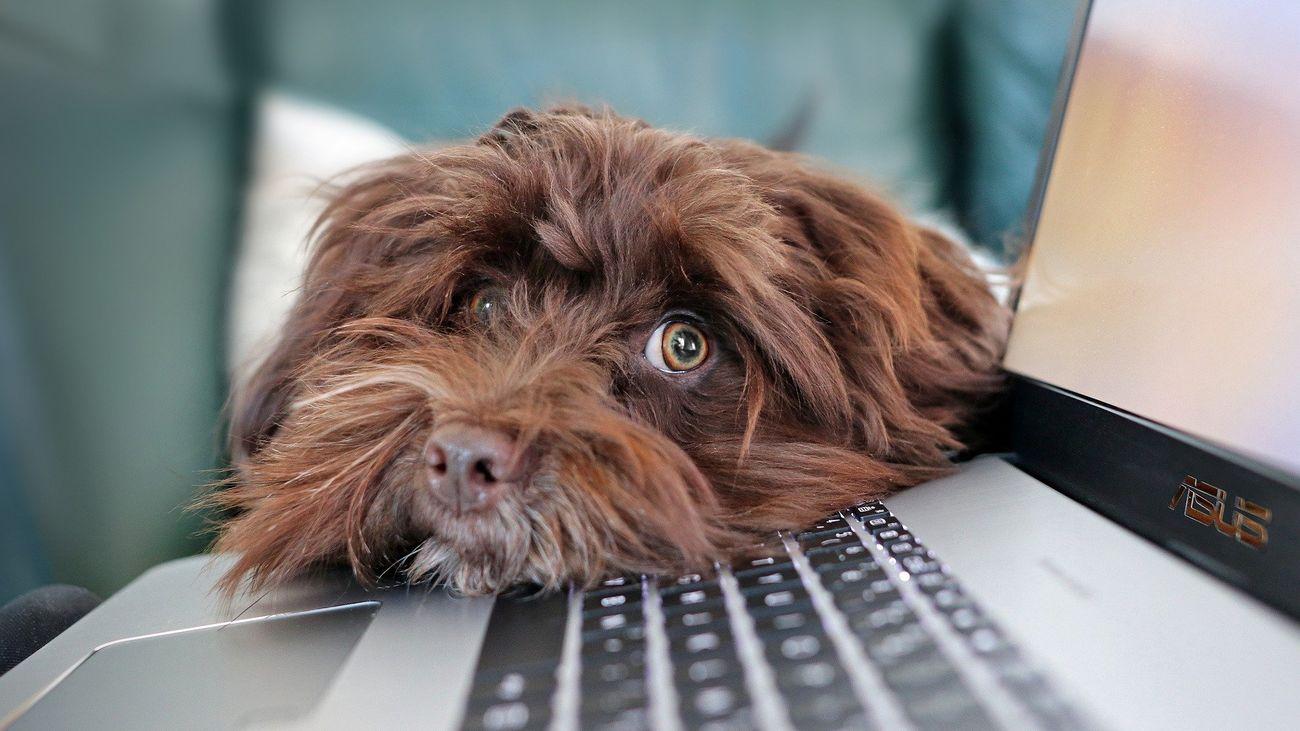 """¿Cuál es la personalidad de tu perro? Mídela con este test de """"perronalidad"""""""