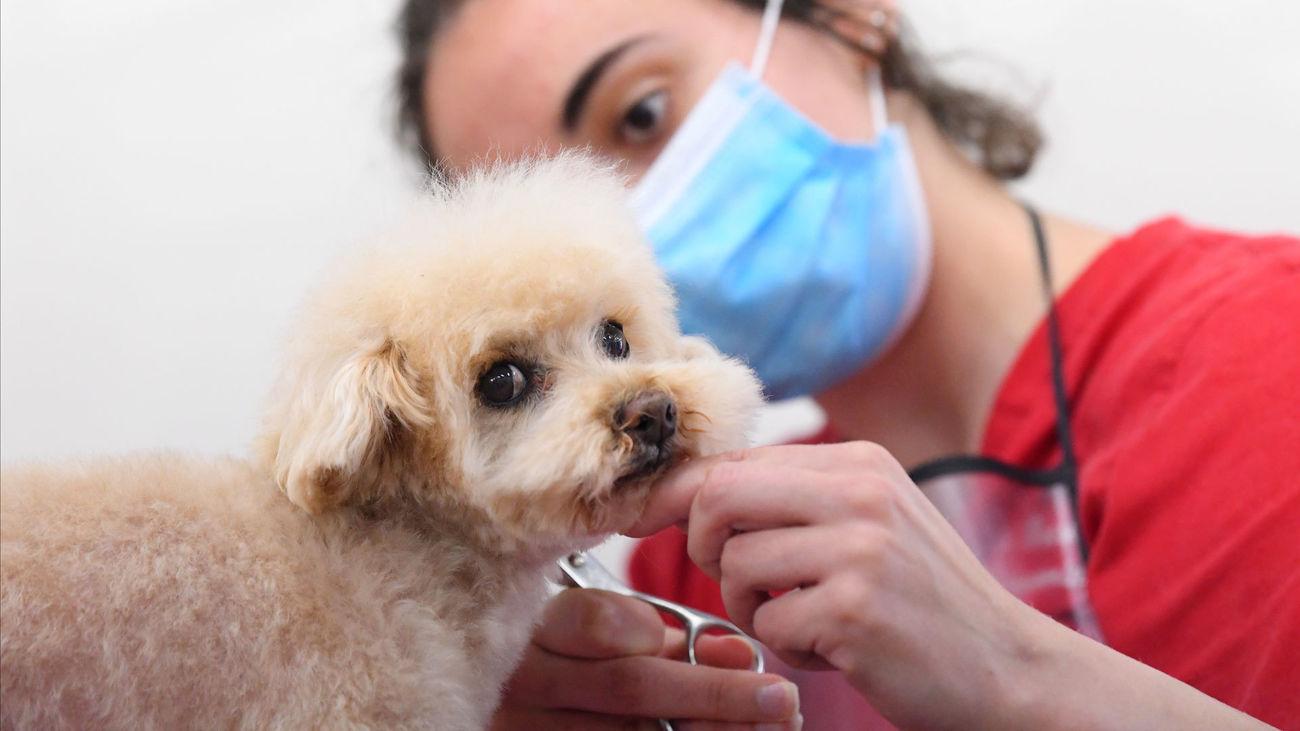Una cuidadora de mascotas con la mascarilla para protegerse del coronavirus