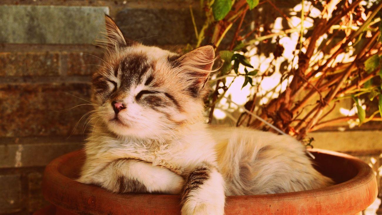 Detenida la presunta estafadora de la adopción de gatos por Internet